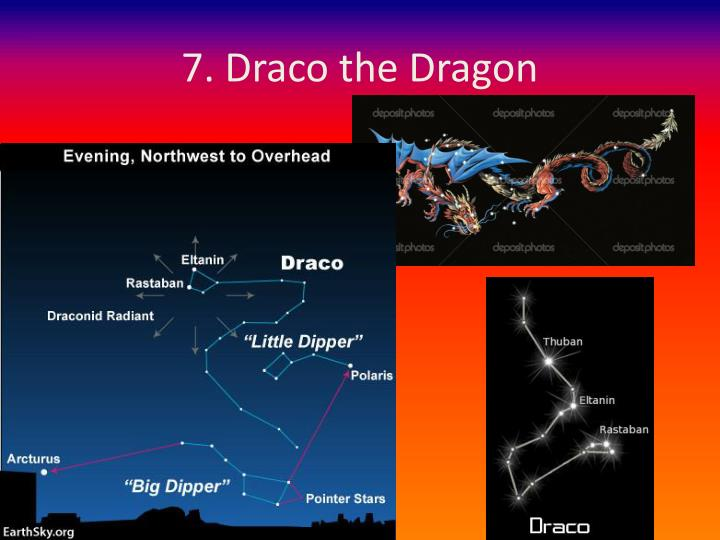 7. Draco the Dragon