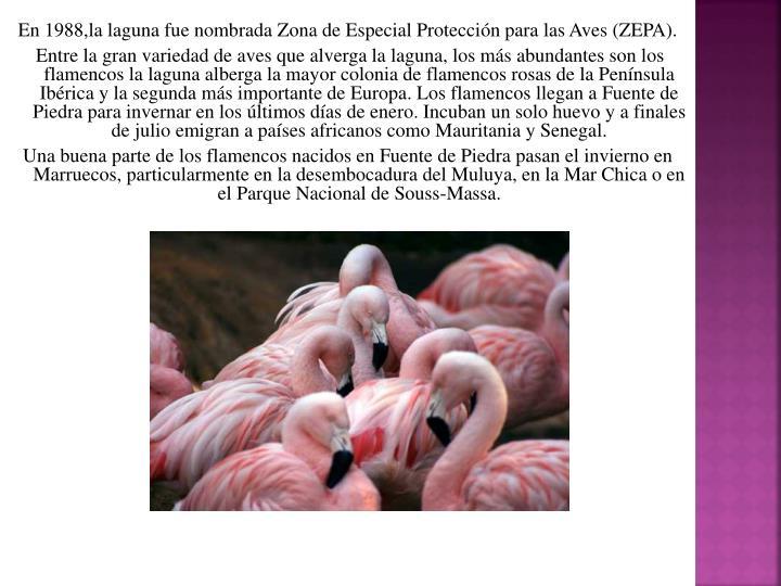 En 1988,la laguna fue nombrada Zona de Especial Protección para las Aves (ZEPA).