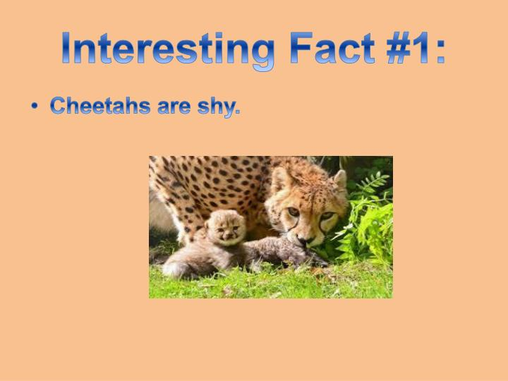 Interesting Fact #1: