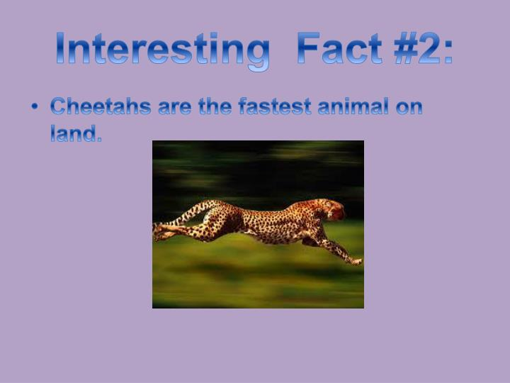 Interesting  Fact #2: