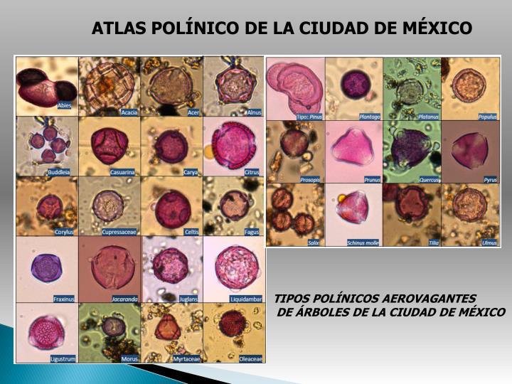 ATLAS POLÍNICO DE LA CIUDAD DE MÉXICO