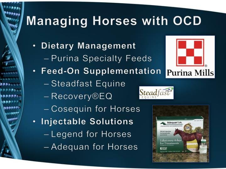 Managing Horses with OCD