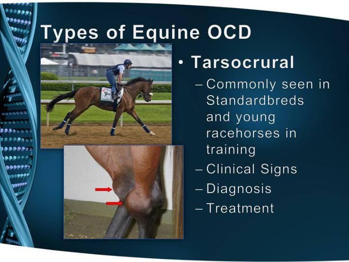 Types of Equine OCD