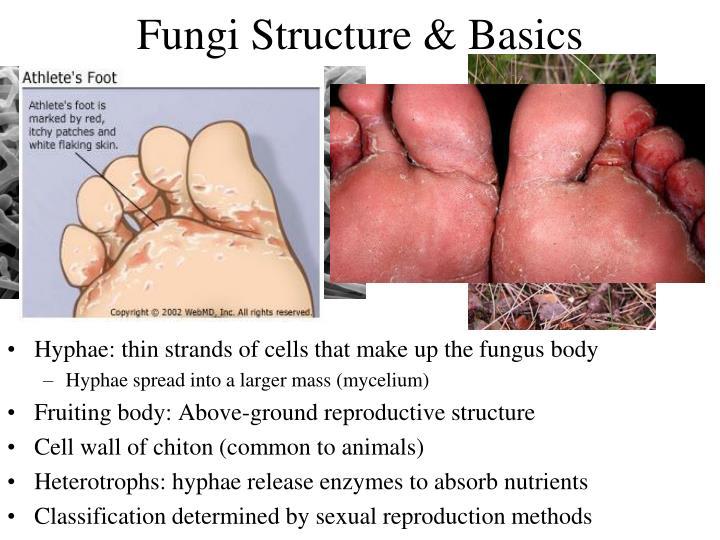 Fungi Structure & Basics