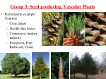 group 3 seed producing vascular plants1