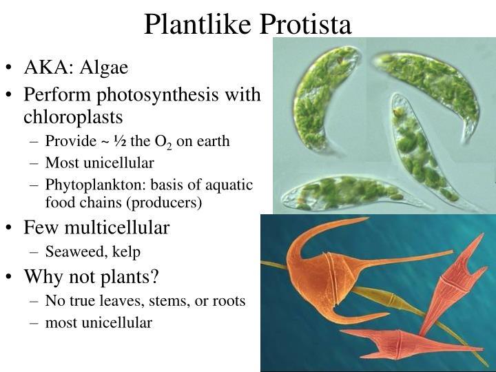Plantlike Protista