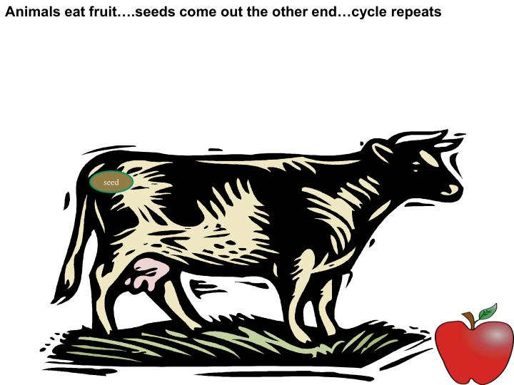 Animals eat fruit….seeds come out the other end…cycle repeats