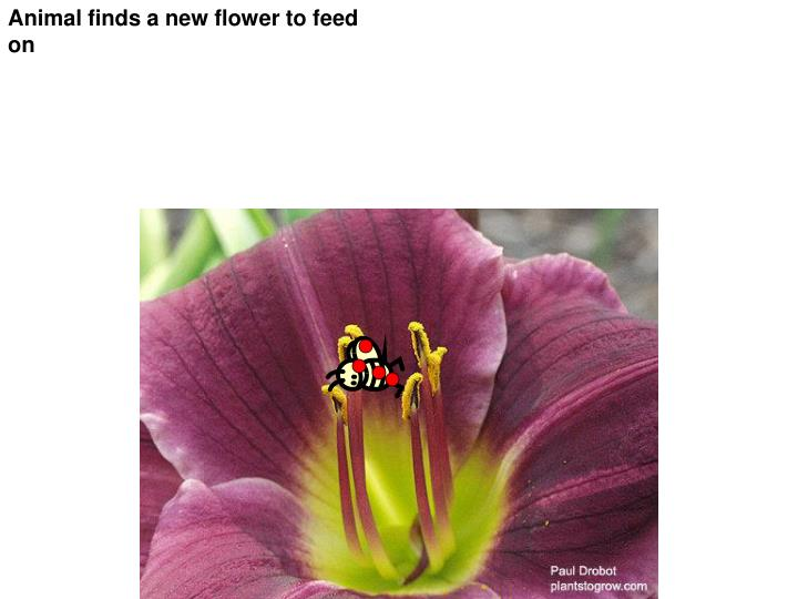 Animal finds a new flower to feed on