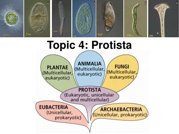 Topic 4: Protista