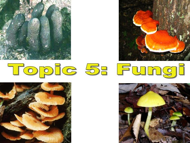 Topic 5: Fungi