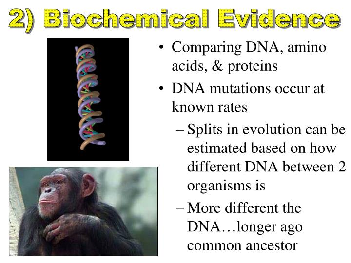 2) Biochemical Evidence