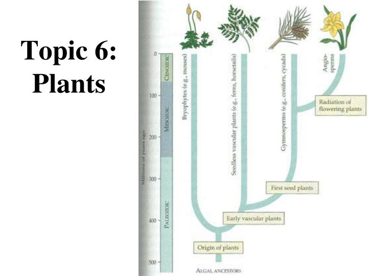 Topic 6: Plants
