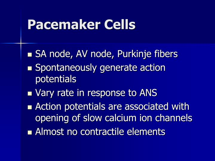 Pacemaker Cells