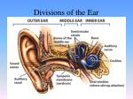 divisions of the ear3