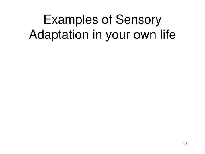 Examples of Sensory Adaptation in your own life