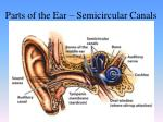 parts of the ear semicircular canals