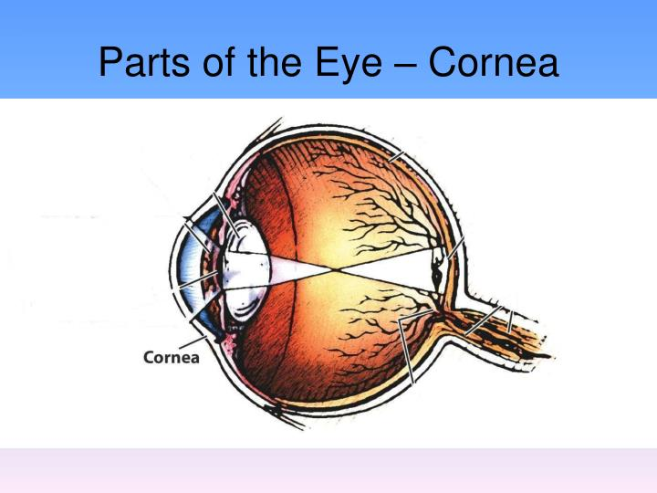 Parts of the Eye – Cornea