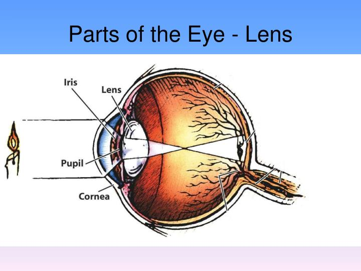 Parts of the Eye - Lens