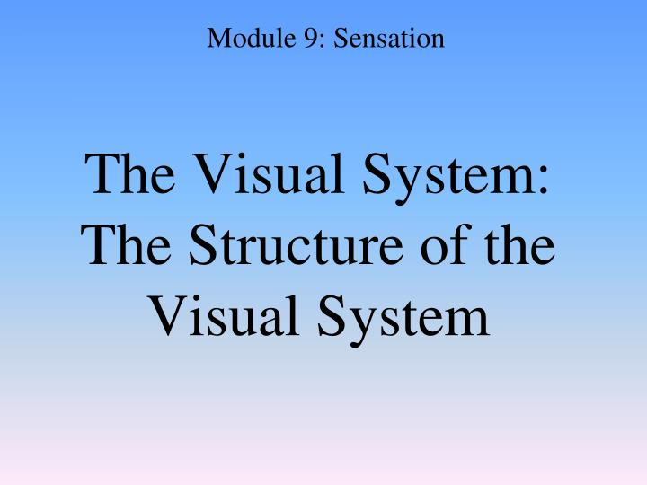 The Visual System: The Structure of the Visual System