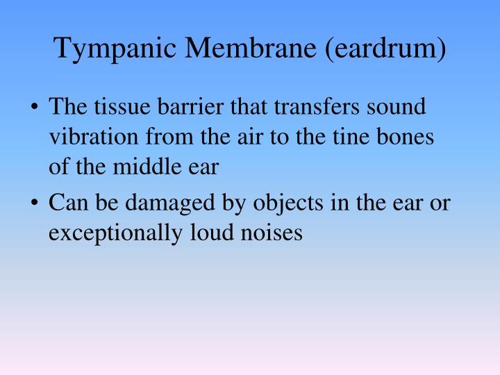 Tympanic Membrane (eardrum)