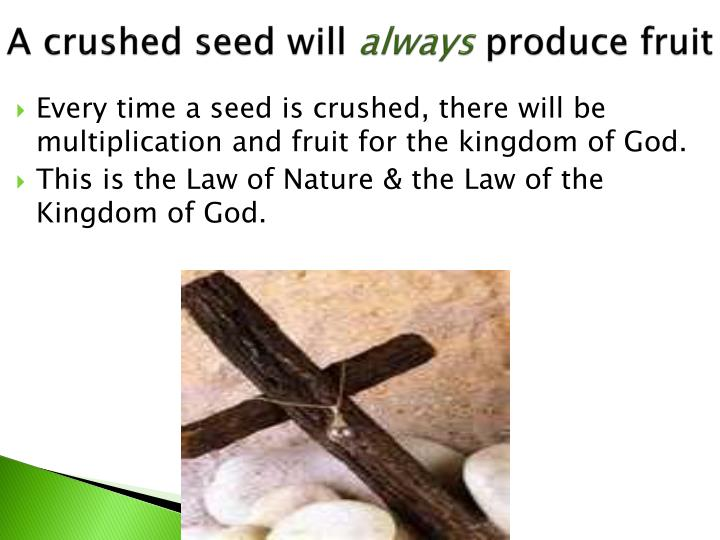 A crushed seed will