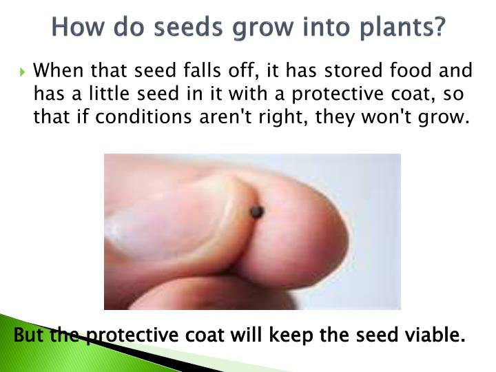 How do seeds grow into plants?