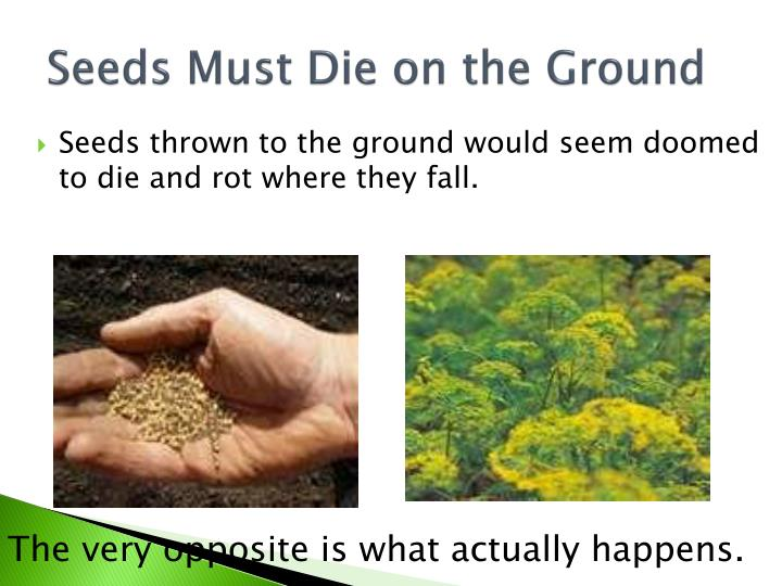 Seeds Must Die on the Ground