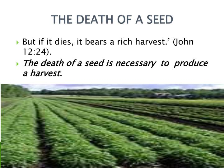 THE DEATH OF A SEED