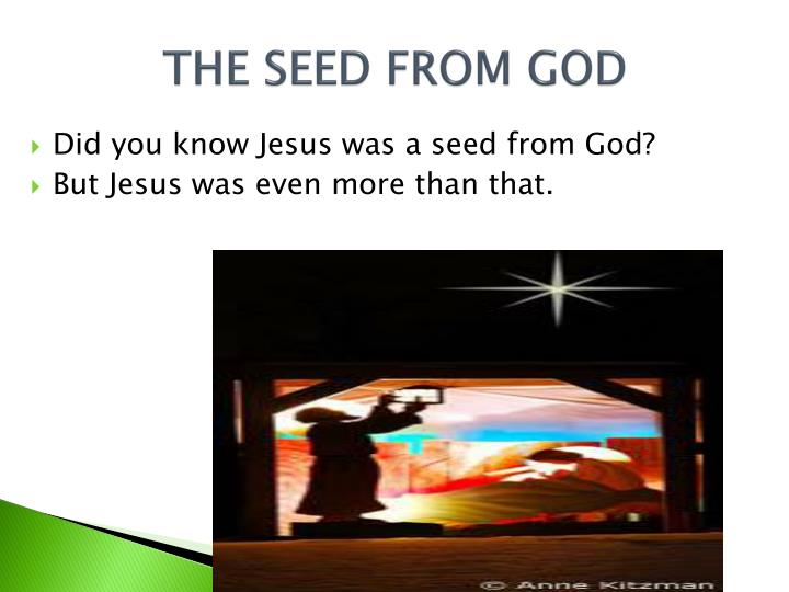 THE SEED FROM GOD