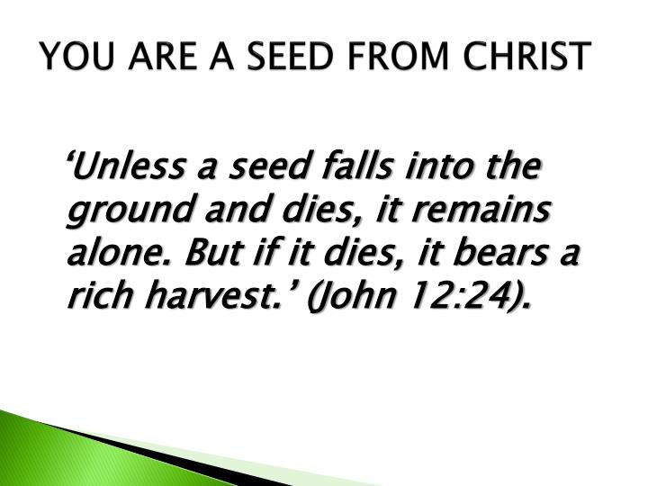 YOU ARE A SEED FROM CHRIST