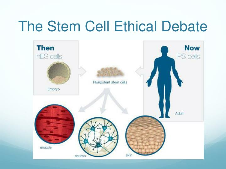 The Stem Cell Ethical Debate