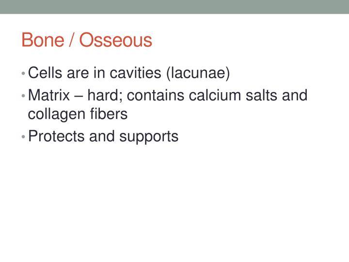 Bone / Osseous