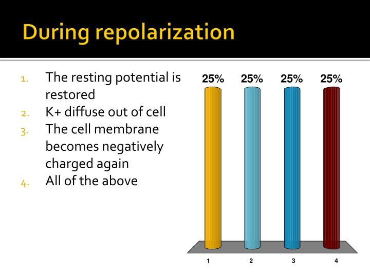 During repolarization