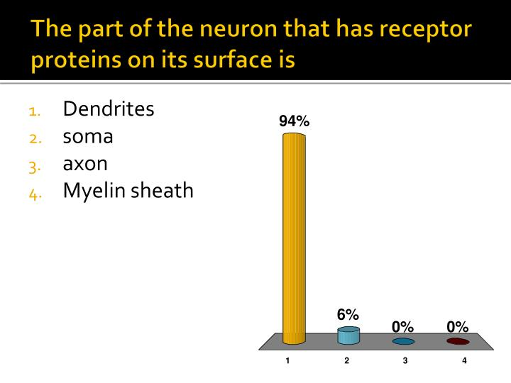 The part of the neuron that has receptor proteins on its surface is