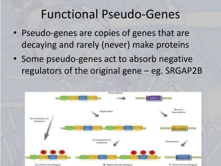 Functional Pseudo-Genes