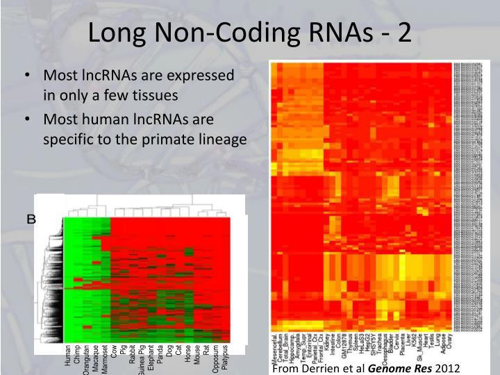 Long Non-Coding RNAs - 2