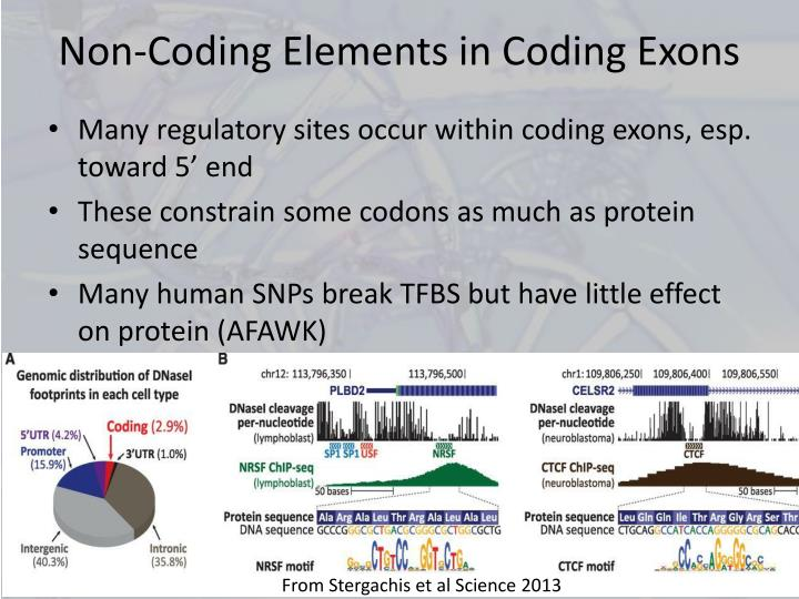 Non-Coding Elements in Coding Exons