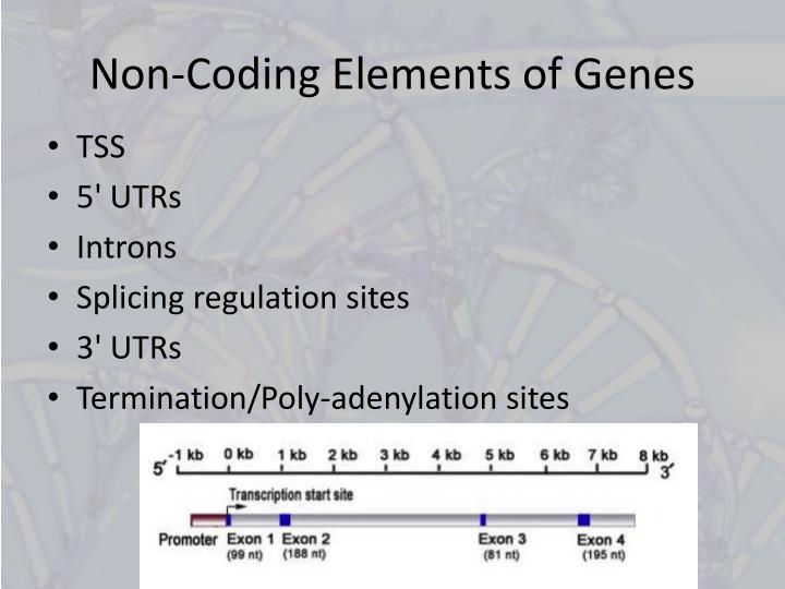 Non-Coding Elements of Genes