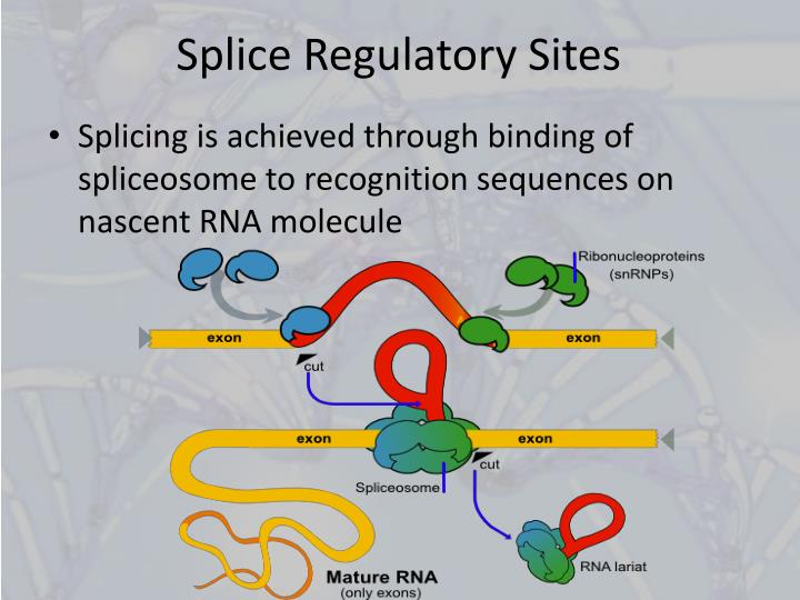 Splice Regulatory Sites