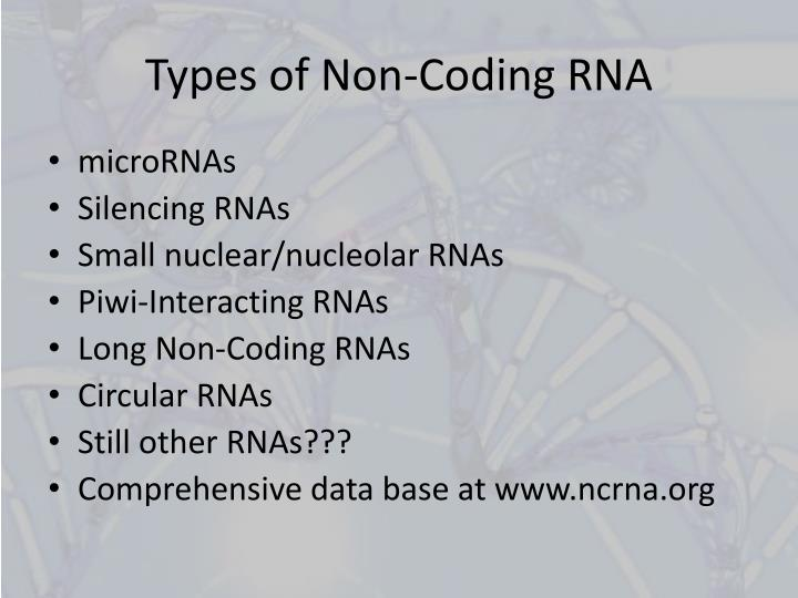 Types of Non-Coding RNA
