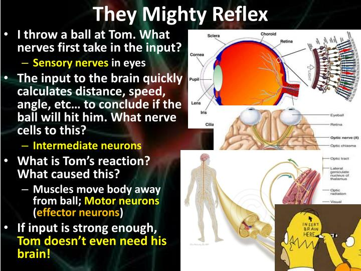 They Mighty Reflex