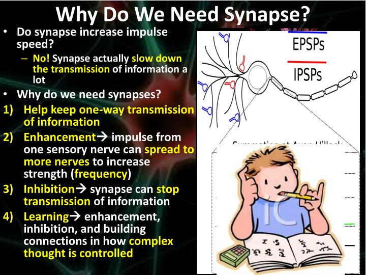 Why Do We Need Synapse?