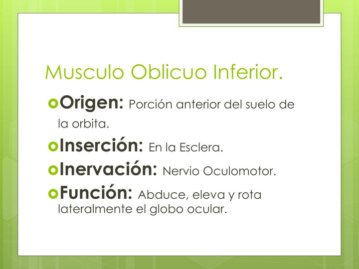 Musculo Oblicuo Inferior.