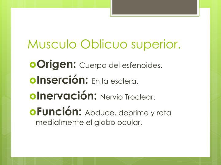 Musculo Oblicuo superior.