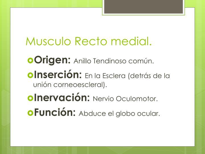 Musculo Recto medial.