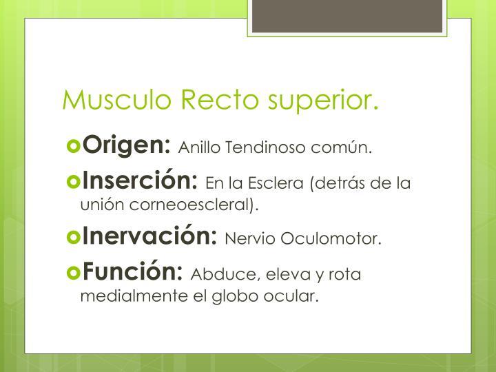 Musculo Recto superior.