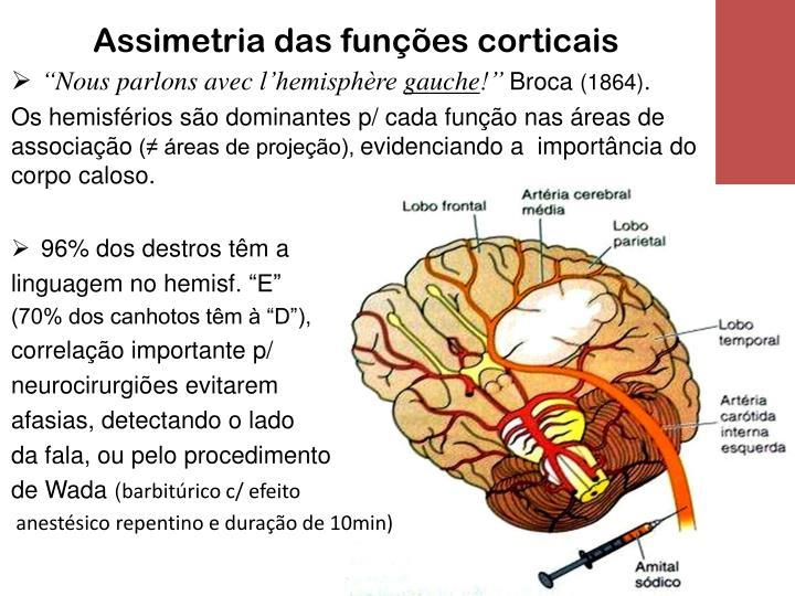 Assimetria das funções corticais