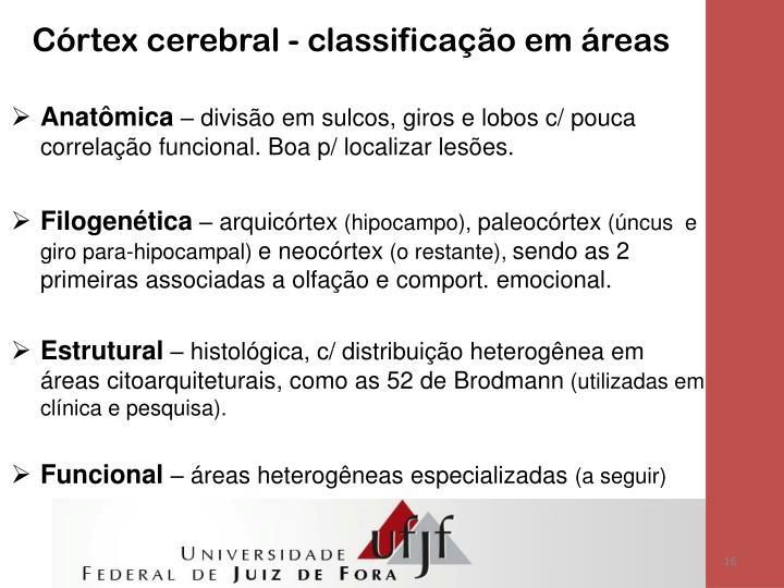 Córtex cerebral - classificação em áreas