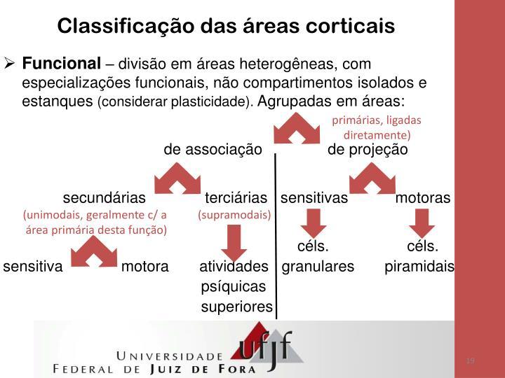 Classificação das áreas corticais