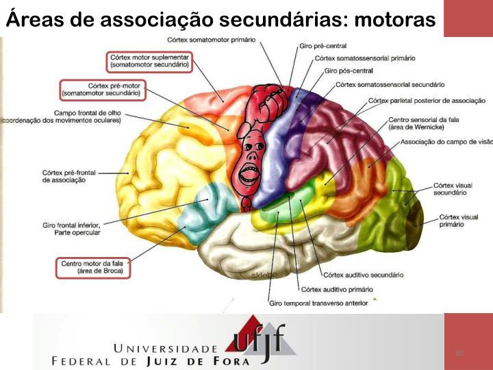 Áreas de associação secundárias: motoras